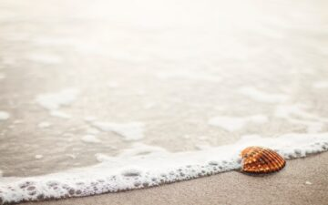 Can you take shells home from Cancun?