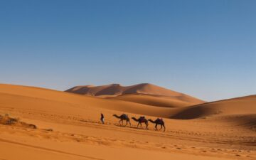 What percent of Africa is desert?